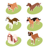Collection of isometric dogs Royalty Free Stock Images