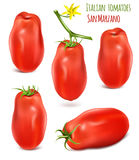 Collection of Italian plum tomatoes San Marzano. Royalty Free Stock Photo