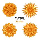 Collection jaune-orange de dahlias Image stock