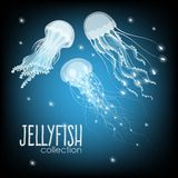 Collection of jellyfish vector illustration