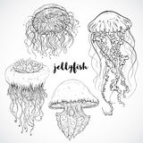 Collection of jellyfish. Vintage set of black and white hand drawn marine fauna.  vector illustration Stock Images