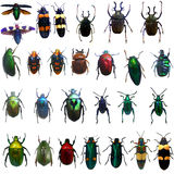 Collection of jewelry beetle Royalty Free Stock Image