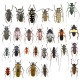 Collection of jewelry beetle Royalty Free Stock Images