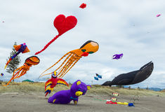 Collection Of Kites Stock Photography