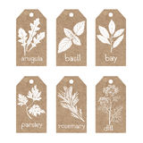 Collection of  kraft paper tags with culinary herbs and spices. Royalty Free Stock Photography