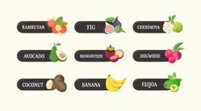 Collection of labels with delicious ripe fresh juicy exotic tropical fruits and their names. Bundle of tags with tasty. Raw vegan food isolated on white Stock Image