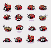Collection of 16 Lady Bug Vector Stock Photography
