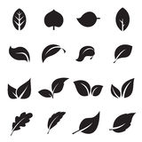 Collection of leaf icons. Black icons isolated on a white background. Vector illustration Stock Photography