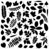 Collection of Leaf Silhouettes stock illustration