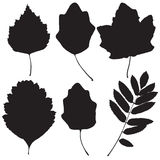 Collection of leaf silhouettes Stock Photos