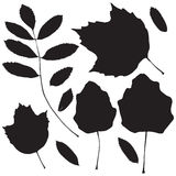 Collection of leaf silhouettes Royalty Free Stock Images