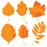 Collection of leaf silhouettes Stock Photography