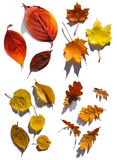 Collection of leafs Stock Image