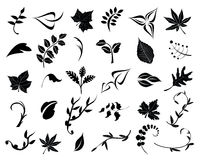 Collection of leaves. Collection of isolated design elements Royalty Free Stock Photography