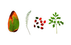 Collection of leaves Royalty Free Stock Images