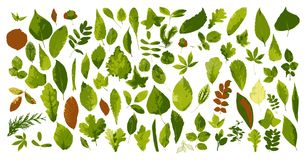 Collection of leaves stock illustration