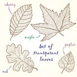 Collection of leaves: cherry, oak, maple, poplar. Royalty Free Stock Photo