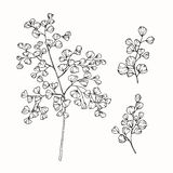Collection of leaves drawing and sketch with line-art Stock Photography