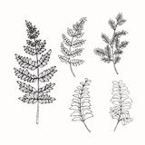 Collection of leaves drawing and sketch with line-art Royalty Free Stock Photography