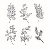 Collection of leaves drawing and sketch with line-art Stock Image