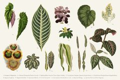 Collection of leaves found in 1825-1890 New and Rare Beautiful Royalty Free Stock Image