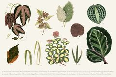 Collection of leaves found in 1825-1890 New and Rare Beautiful-Leaved Plants. Digitally enhanced from our own 1929 edition of th Stock Image