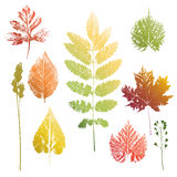 Collection of leaves and grass imprints. Collection of autumn colors leaves and grass imprints  on white background Stock Photo