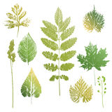 Collection of leaves and grass imprints. Collection of green colors leaves and grass imprints  on white background Stock Image