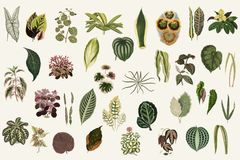 Collection of leaves from New and Rare Beautiful-Leaved Plants. Digitally enhanced from our own 1929 edition of the publication. Collection of leaves from New Stock Photography