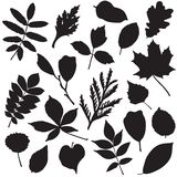 Collection of leaves silhouettes Stock Images