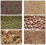 Collection of legumes Stock Image