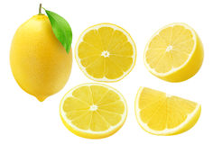 Collection of lemon fruits isolated on white royalty free stock image