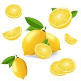 Collection of lemon icons fruits isolated on white background. Collection of lemon fruits isolated on white. Lemon icon set vector illustration royalty free illustration