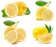 Collection of lemons isolated on a white background royalty free stock image