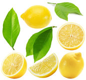 Collection of lemons isolated on the white background Royalty Free Stock Photography