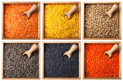 Collection of lentils Royalty Free Stock Images