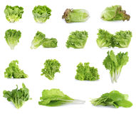 Collection of Lettuce isolated on white background Stock Photos