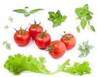 Collection Lettuce, tomatoes and herbs Royalty Free Stock Photos