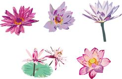 Collection of lotus Royalty Free Stock Photos