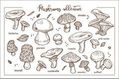 Collection mûre comestible et non comestible de monochrome de mashrooms de forêt illustration de vecteur