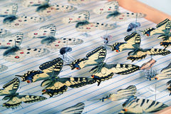 Collection, machaons et apollos de papillon Images stock