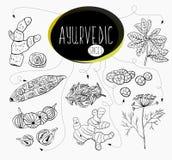 collection Main-esquissée d'éléments des épices d'Ayurvedic dans notre cuisine Herbes et suppléments Ayurveda illustration stock