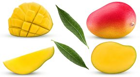 Collection mango exotic fruit, whole, cut in half, slice, cubes royalty free stock photo