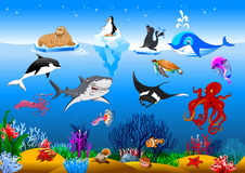 Collection of marine animals Stock Photography