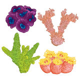 Collection of marine plants and corals. Colorful hand drawn marine flora. Isolated vector illustration. Stock Photo
