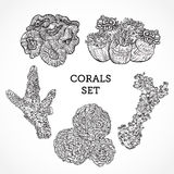 Collection of marine plants and corals. Vintage set of black and white hand drawn marine flora. Royalty Free Stock Image