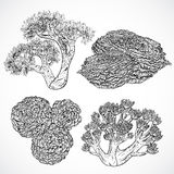 Collection of marine plants and corals. Vintage set of black and white hand drawn marine flora. Royalty Free Stock Photo
