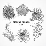 Collection of marine plants, leaves and seaweed.  Stock Photography