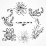 Collection of marine plants, leaves and seaweed. Vintage set of black and white hand drawn marine flora. Vector illustration in line art style.Design for Royalty Free Stock Image