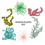 Collection of marine plants, leaves and seaweed. Vintage set of colorful hand drawn marine flora. Royalty Free Stock Images